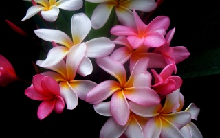 Beautiful flowers wallpapers and stock photos