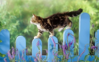 Cat wallpapers and stock photos