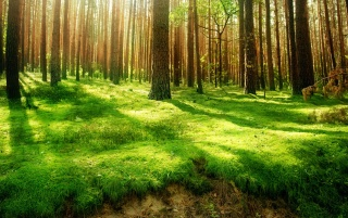 Forest wallpapers and stock photos