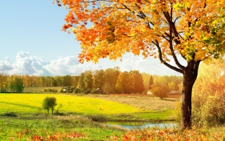 Beautiful tree wallpapers and stock photos