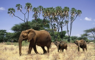Elephants and cubs wallpapers and stock photos