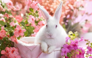 White Easter bunny wallpapers and stock photos
