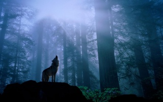Howling in the night wallpapers and stock photos