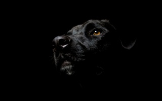 Dog in the dark wallpapers and stock photos