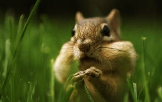 Cute squirrel wallpapers and stock photos