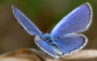 Random: beautiful blue butterfly