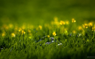 Green field with flowers wallpapers and stock photos