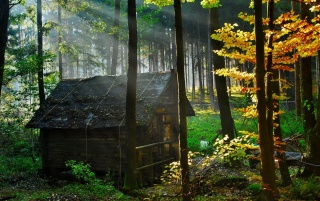 Forest House wallpapers and stock photos