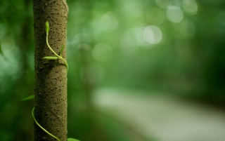 Tree bokeh wallpapers and stock photos