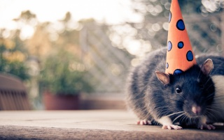 Mouse with a hat wallpapers and stock photos