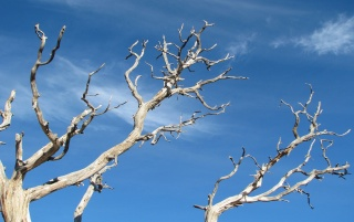 DeadTree wallpapers and stock photos