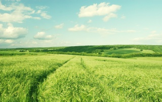 Beautiful green field wallpapers and stock photos