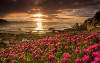 Flowers & Sunrise wallpapers and stock photos