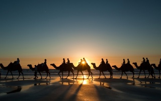 Camels wallpapers and stock photos