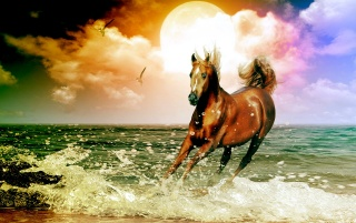 Horse on a beach wallpapers and stock photos
