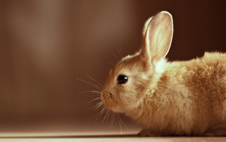 Cute rabbit wallpapers and stock photos