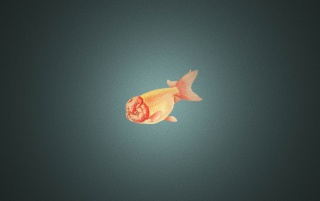 Ranchu Goldfish wallpapers and stock photos