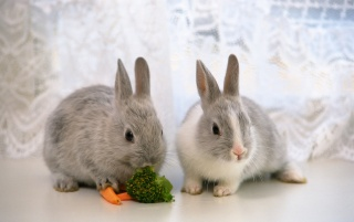 Previous: cute bunnies