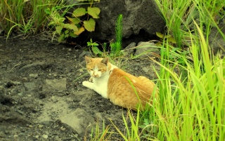 Next: Tabby Cat in nature