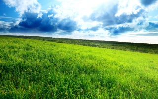 Green Field wallpapers and stock photos
