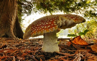 Mushroom wallpapers and stock photos