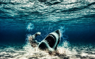 Shark wallpapers and stock photos