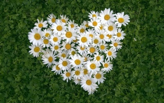 Flower Heart wallpapers and stock photos