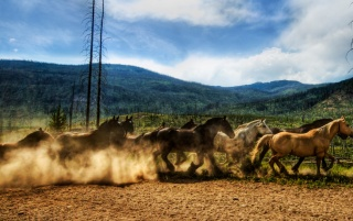 Wild Horses wallpapers and stock photos