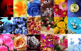 FLOWER wallpapers and stock photos