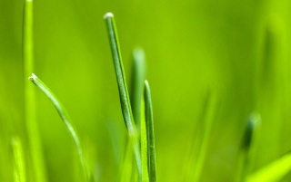 Previous: Android 3.0 grass wallpaper