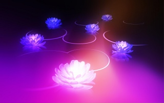 Android Honeycomb 3.0 Lotus wallpapers and stock photos