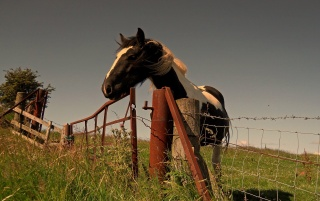 Horse wallpapers and stock photos