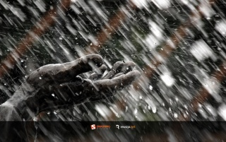 Summer Rain wallpapers and stock photos