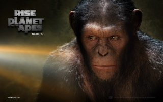 Rise of the Planet of the Apes: Caesar wallpapers and stock photos