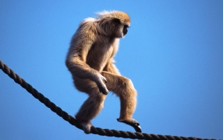 Monkey wallpapers and stock photos