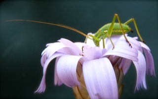 Flower & Insect wallpapers and stock photos