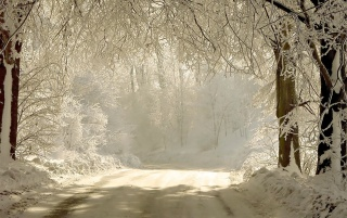 Snowy forest road wallpapers and stock photos