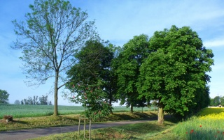 Chestnut Avenue wallpapers and stock photos