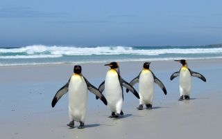 Penguins on the beach wallpapers and stock photos
