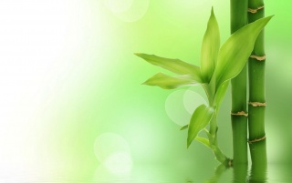 Green bamboo wallpapers and stock photos