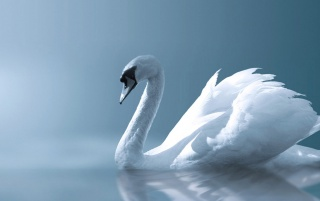 Angel swan wallpapers and stock photos