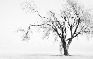 Sad tree wallpapers and stock photos