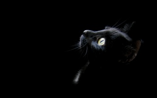 Black cat head wallpapers and stock photos