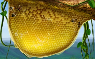 Previous: Honeycomb