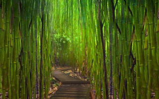 Road in bamboo forest wallpapers and stock photos