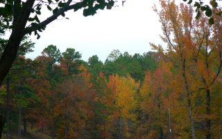 Random: Fall Color in the Valley 2