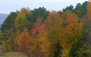 Random: Fall Color in the Valley 4