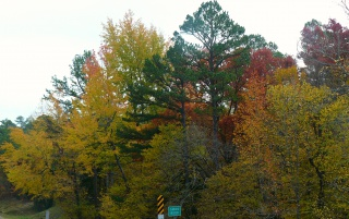 Random: Fall Color in the Valley 5