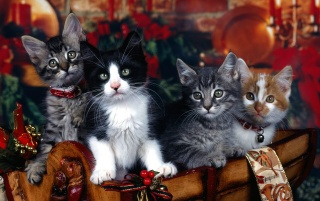 Christmas Cats wallpapers and stock photos