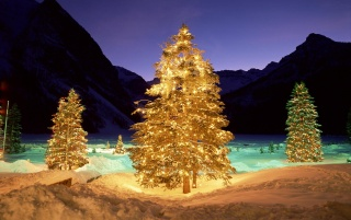 Christmas trees in the wild wallpapers and stock photos
